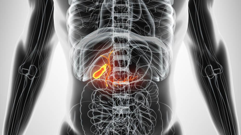 Modelo 3D destacando a vesícula, órgão atingido nos casos de pedra na vesícula.
