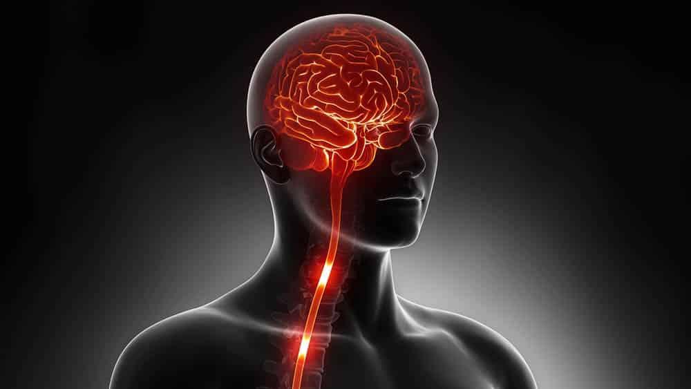 Ilustração digital destacando cérebro e medula espinhal em um corpo humano.