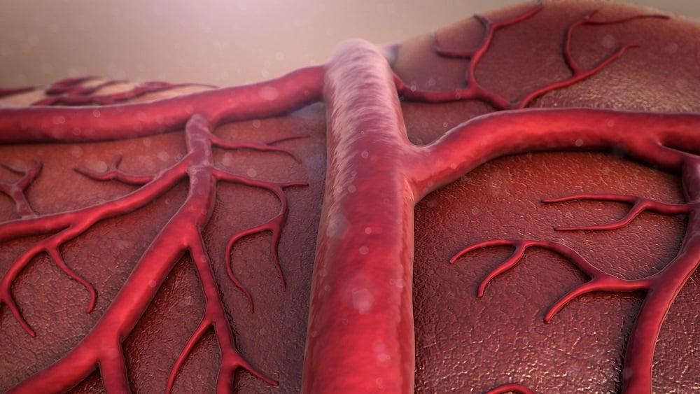 Ilustração de vasos sanguíneos, que são afetados pelo Sarcoma de Kaposi