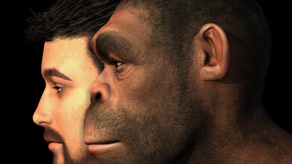 desenho de rosto humano e de hominídeo sobrepostos. Muitos ainda duvidam do acaso da criação