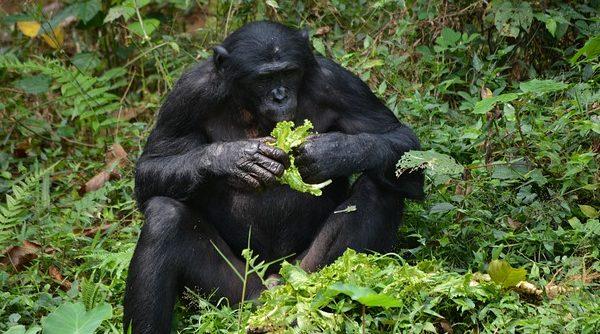 Macacos intelectuais | Artigo