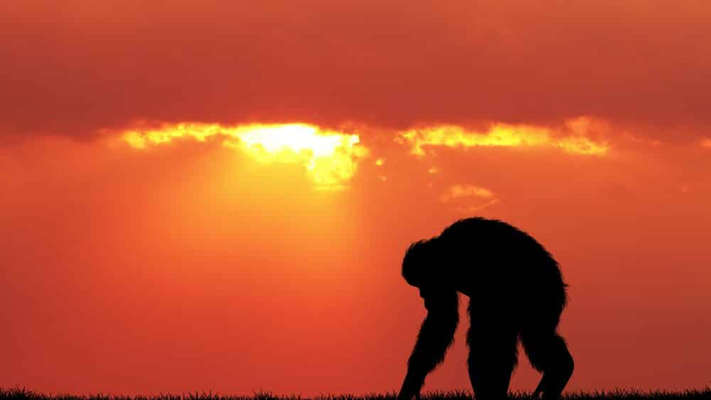 imagem de chipanzé ao por do sol
