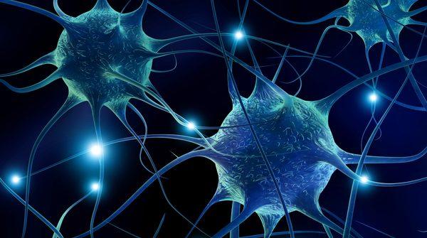 A longa vida dos neurônios | Artigo