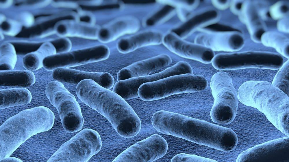 visão ampliada de bactérias no microscópio. bactérias e ganho de peso têm relação