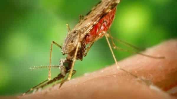 Malária | Entrevista