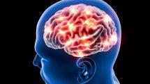 Imagem 3D de cérebro e neurônios envolvidos na memória e na linguagem