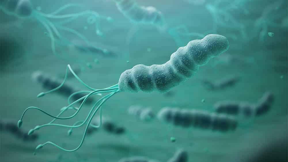 Ilustração 3D de bactérias H. pylori.