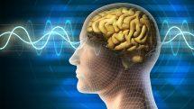 Ilustração digital de uma cabeça de perfil com o cérebro e raio x.