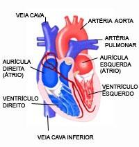 ilustração de coração. sopro cardíaco em crianças pode ser benigno