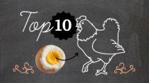 Veja quais são os 10 alimentos que têm mais colesterol   Infográfico