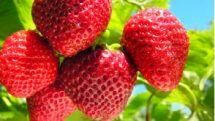 Alimentos apresentam agrotóxicos acima do recomendado