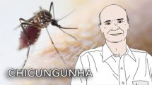 Alerta: Chikungunya | Coluna #12