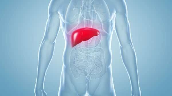 Gordura no fígado (esteatose hepática)