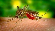 zika vírus microcefalia