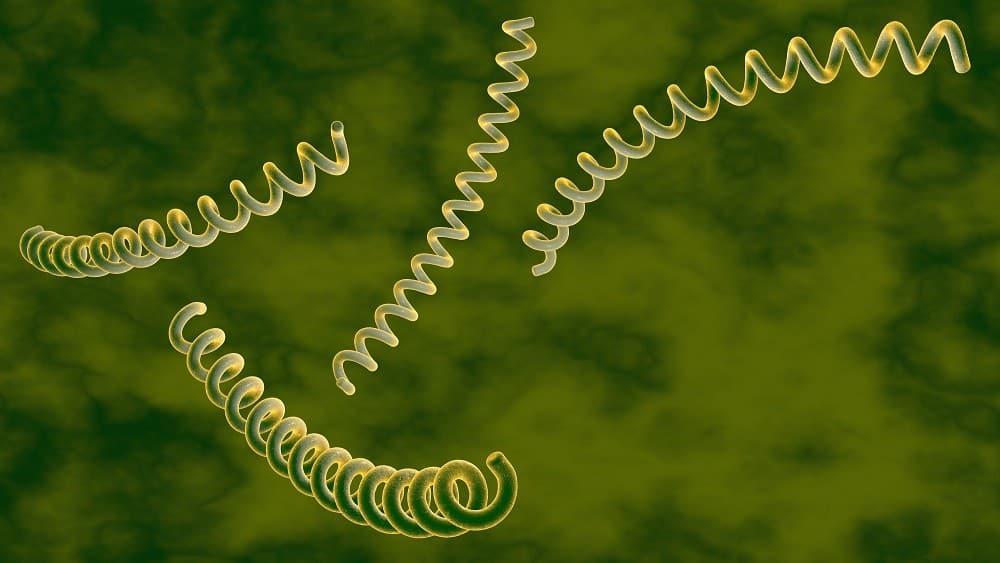 Aumento do número de casos de sífilis preocupa especialistas