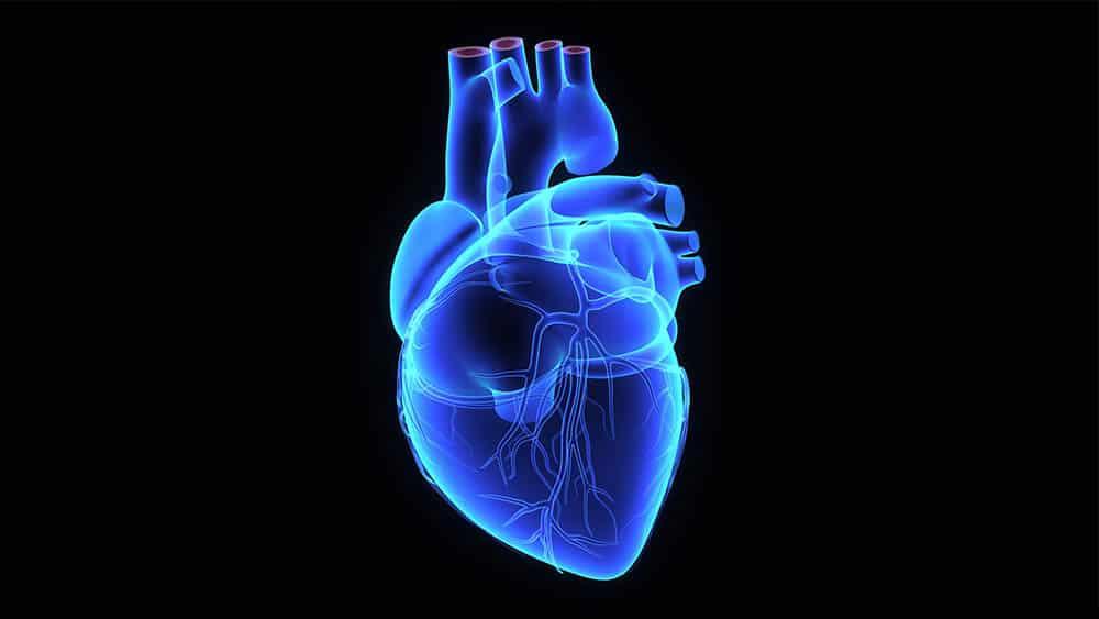 Ilustração de coração humano em azul em fundo preto.