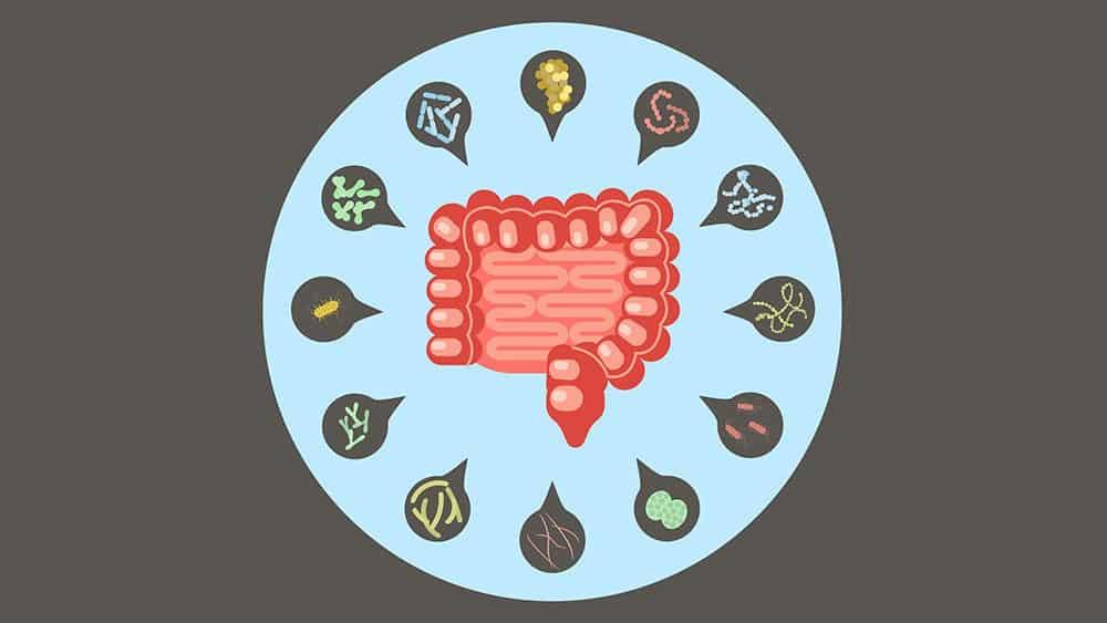 Ilustração com intestino no centro e ícones representando micro-organismos ao redor.
